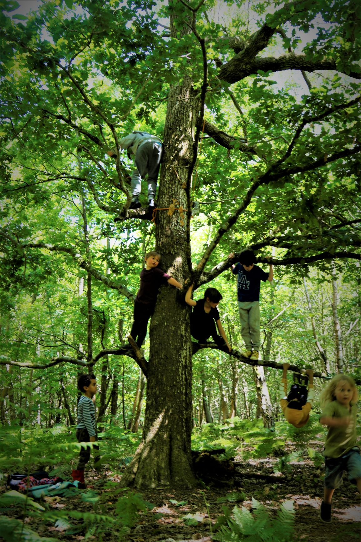 Wild Child Woodland Days session mentored by Luke Funnell