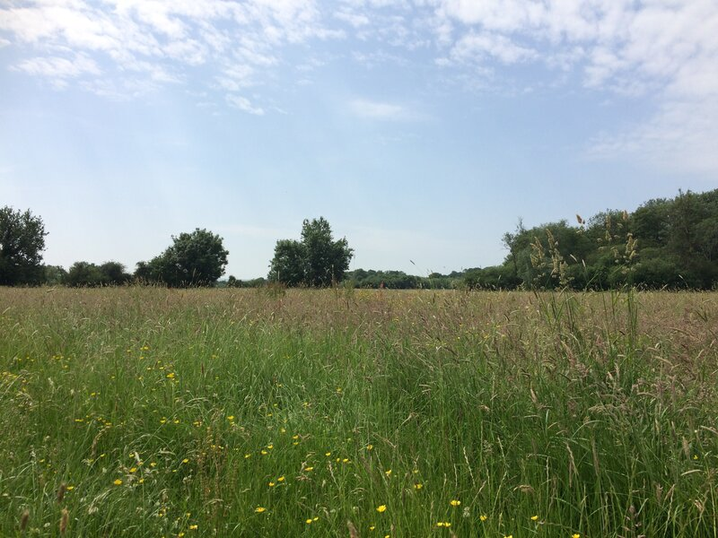 Waters of Life - a Well-being Pilgrimage walk mentored by Julia Gillick