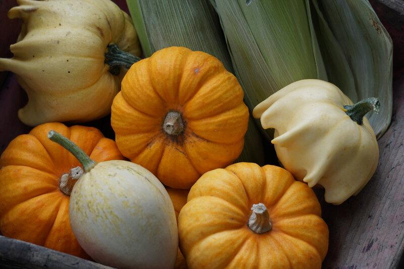 Introduction to Vegetable Gardening block mentored by Forest Garden Shovelstrode Shovelstrode