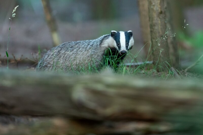 Birds, Burrows and Badger Tracks course mentored by Phil Greenwood