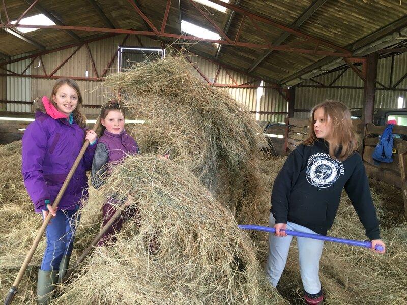 Live the Life of a Farmer block mentored by Jayne Duveen