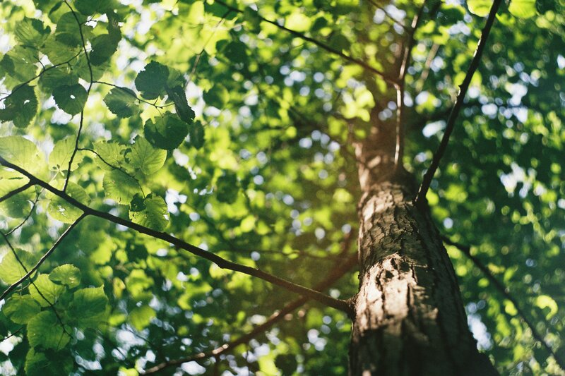 Woodland Mindfulness Course (MBSR/MBCT) block mentored by Polly Palmer