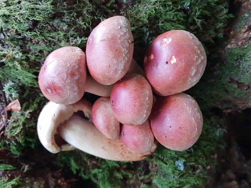 Full-day Fungi Identification Workshop block mentored by Fergus Drennan
