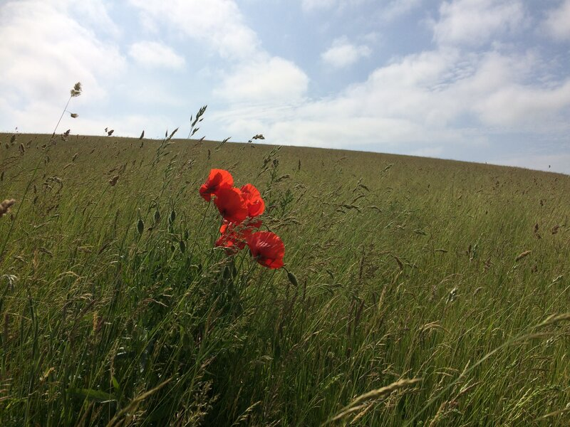 Up on the Downs - a Young Adults' Well-being Pilgrimage walk mentored by Julia Gillick