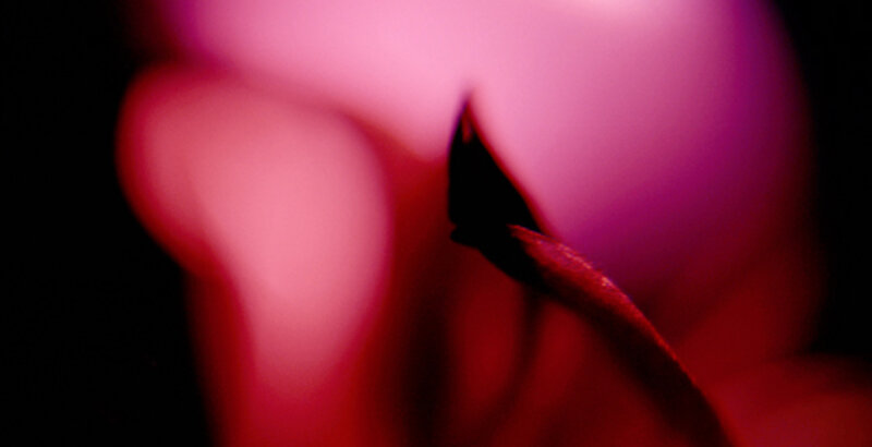 Online Close-Up Photography - Playing with Shapes, Lines and Colours! block mentored by Dr Eva Kalpadaki